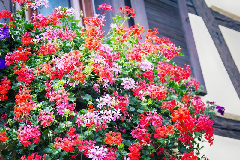 Flower beds in yards, on window sills. And balconies. Amateur floriculture of French cities stock photos