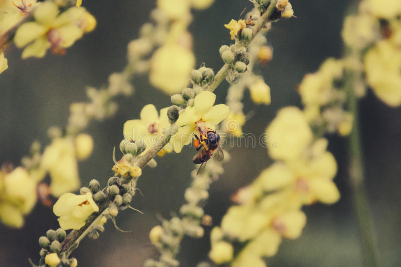 Flower and Bee royalty free stock images