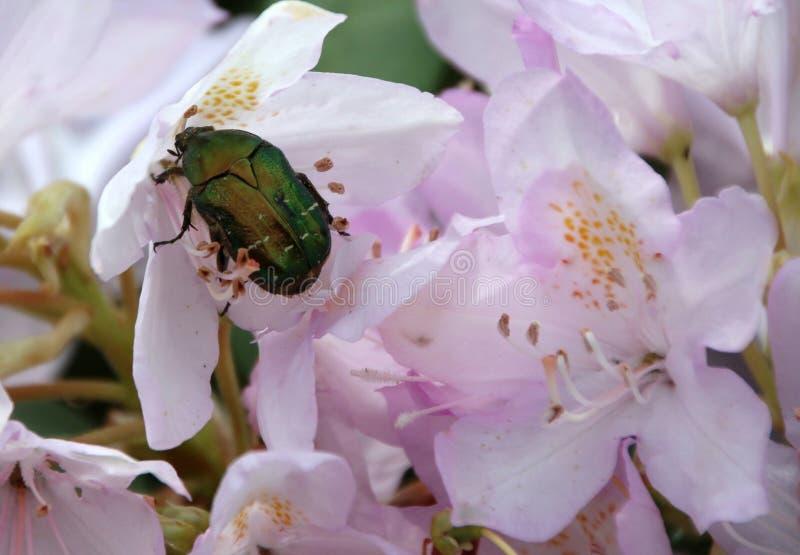 Flower, Bee, Flora, Blossom Free Public Domain Cc0 Image