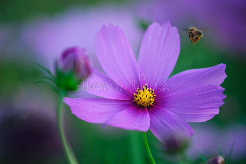 Flower and bee royalty free stock photo