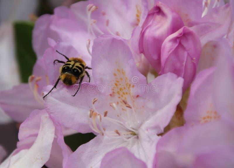 Flower, Bee, Nectar, Honey Bee stock photo