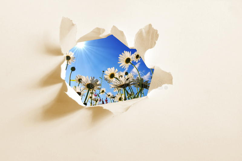 Flower behind hole in paper stock image