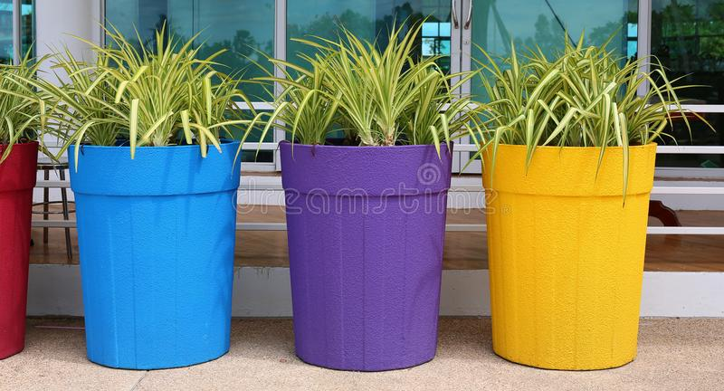 Flower in big colorful pot, garden decoration stock photos