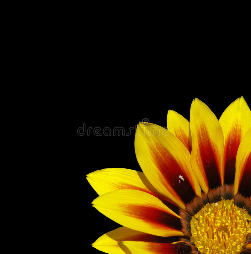 flower on black royalty free stock photo