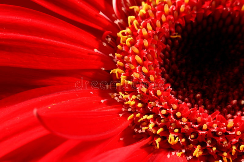 The flower black hole royalty free stock photos