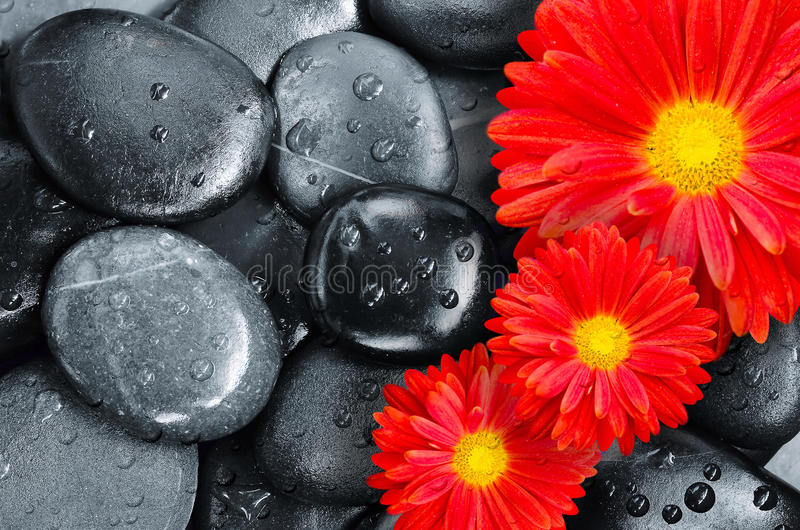 Flower on black pebbles in water drops as background stock images