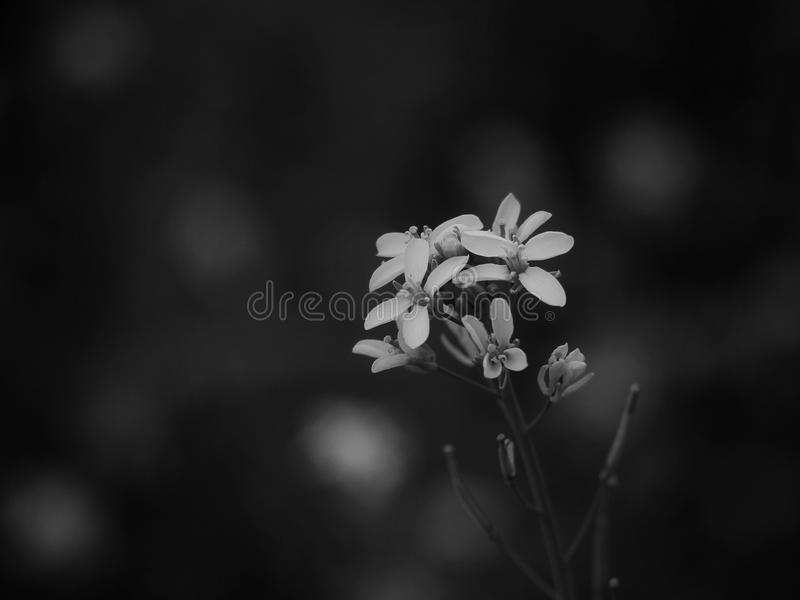 Flower with black and white stock photography