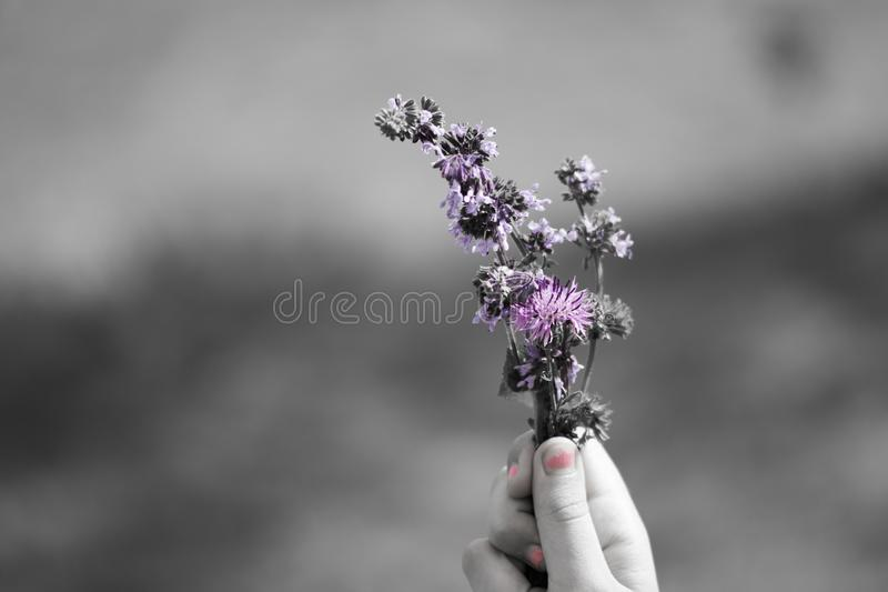 Flower, Black And White, Purple, Violet stock photos