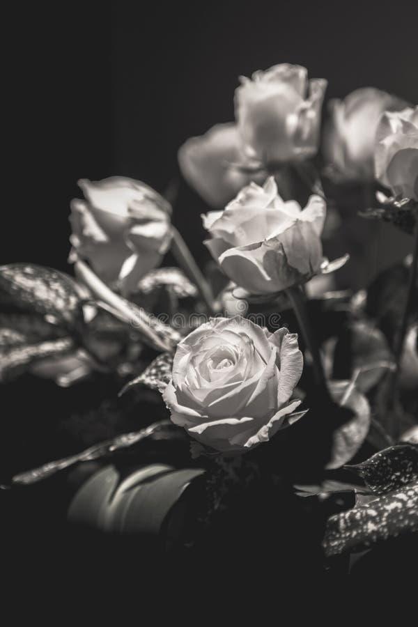 Flower, Black And White, Black, Rose Family royalty free stock photos