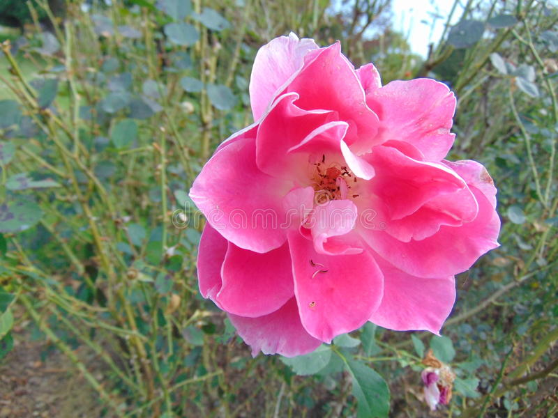 Flower bloom 2 royalty free stock photos