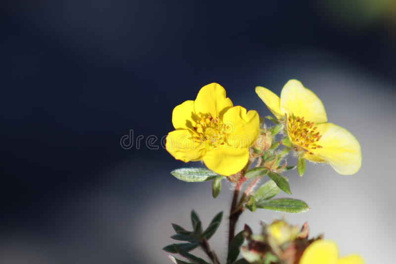 Flower in Bloom In The Park royalty free stock image
