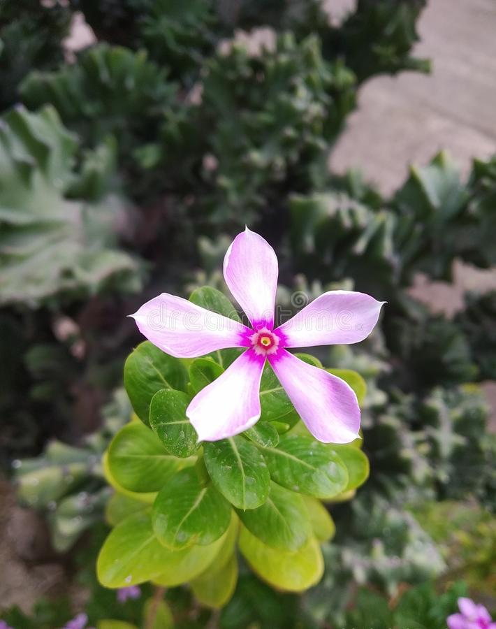 Flower blooming in the nature stock photo