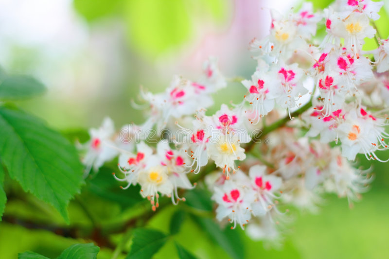 flower blossom royalty free stock photography