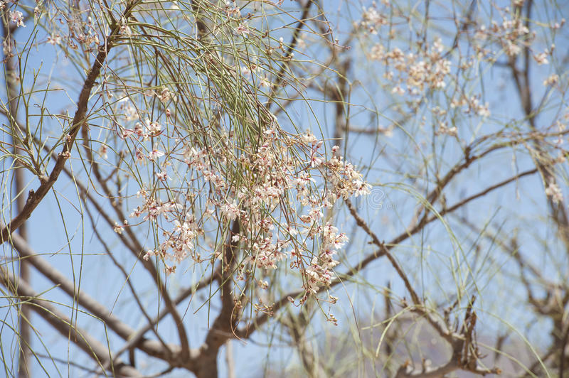 Download Flower Blossom On A Desert Tree Stock Image - Image of flora, pink: 39503201