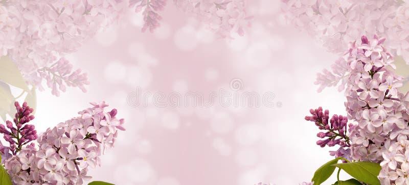 Flower, Blossom, Pink, Purple stock photo