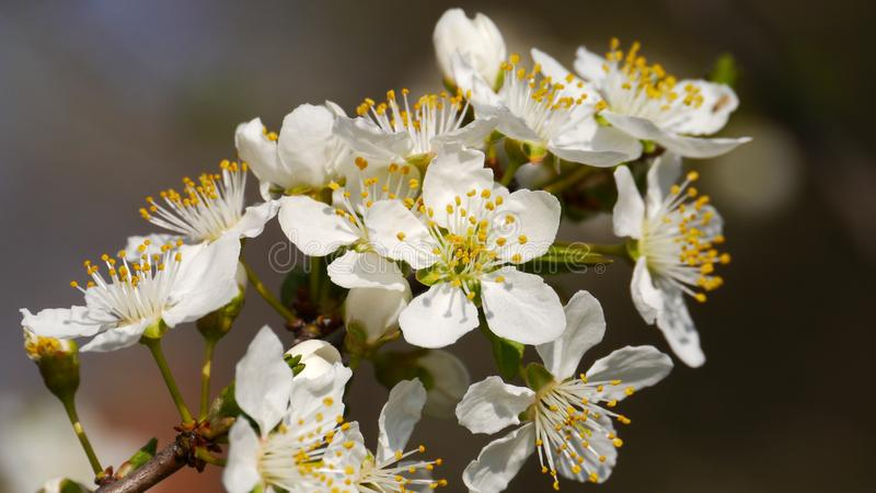 Flower, Blossom, Spring, Flora royalty free stock photography