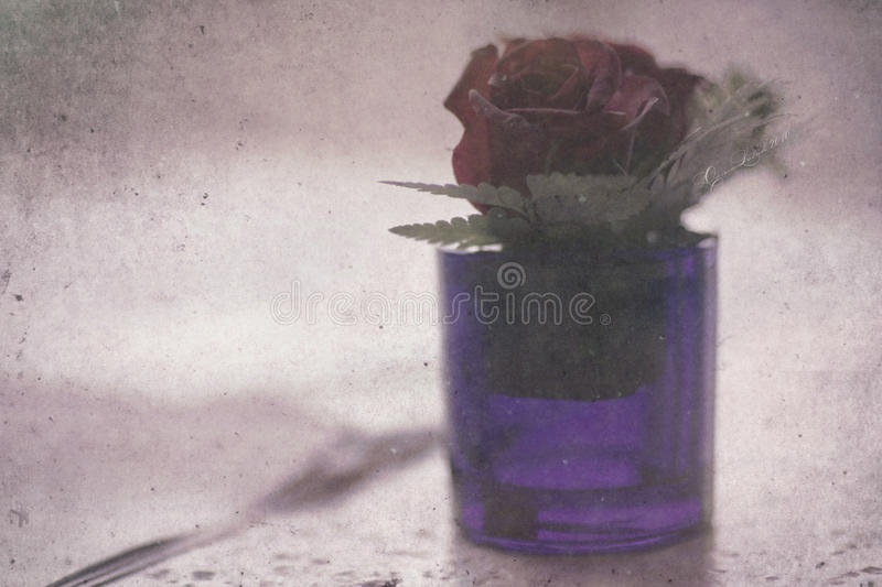 Flower blossom in vase royalty free stock images