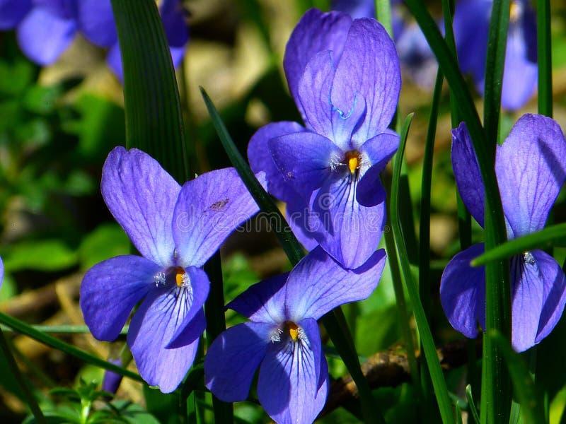 Flower, Blue, Flora, Plant stock images