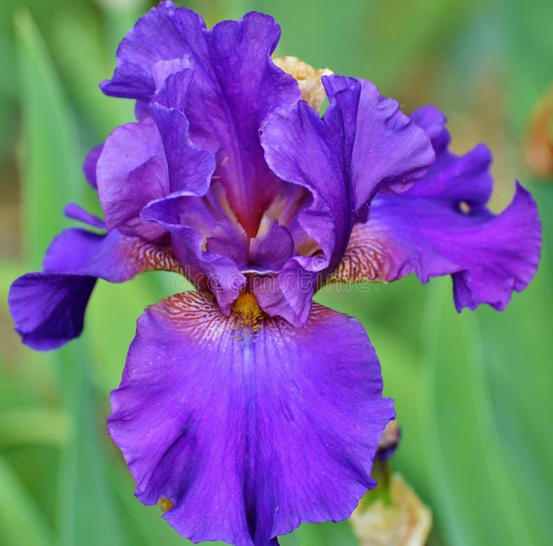 Flower, Blue, Plant, Flowering Plant Free Public Domain Cc0 Image