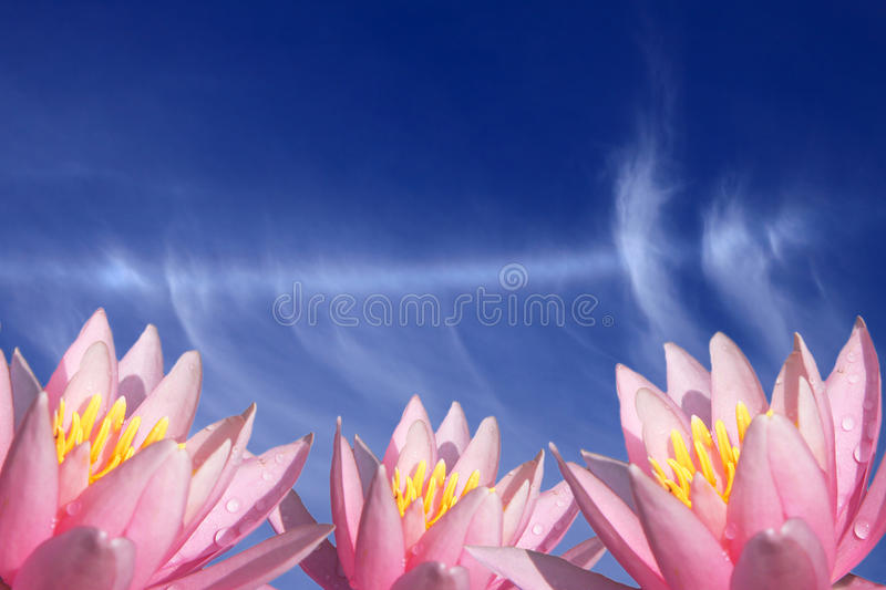 Flower and blue sky stock images