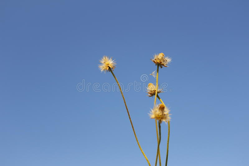 Flower blue sky backdrop. royalty free stock image