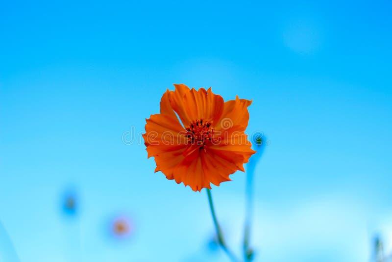 Flower, Blue, Sky, Orange royalty free stock images