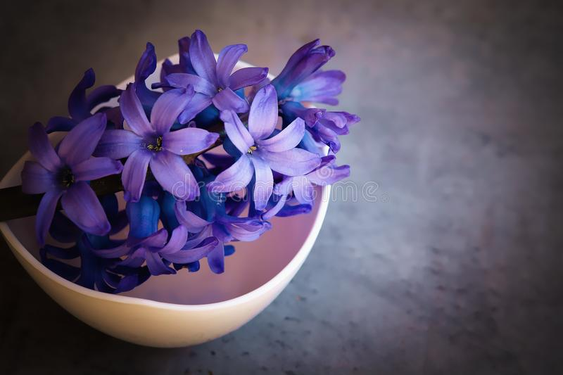 Flower, Blue, Violet, Purple royalty free stock image