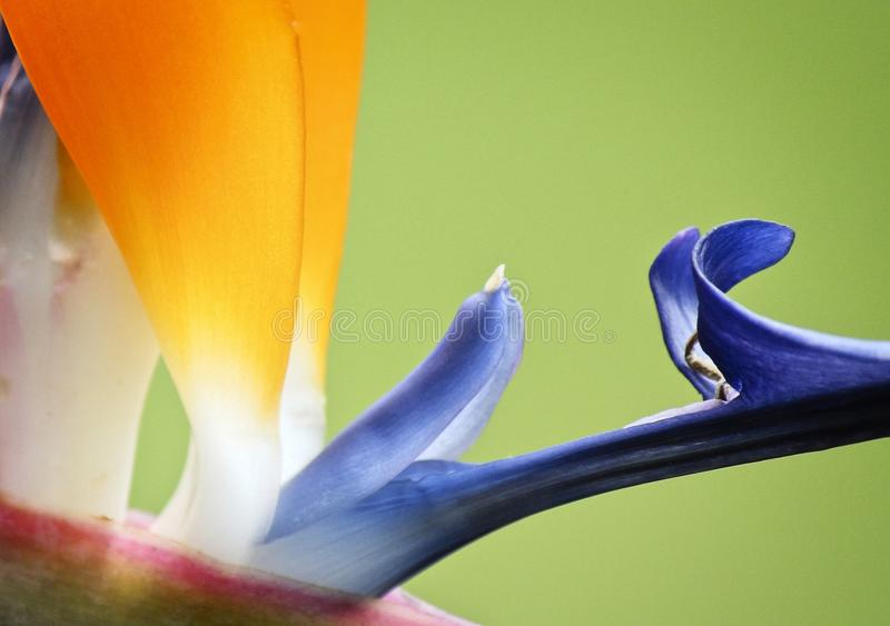 Flower, Blue, Yellow, Purple stock images