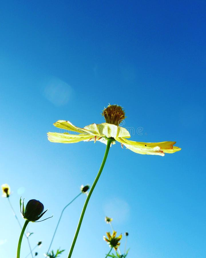 Flower and bluesky stock image
