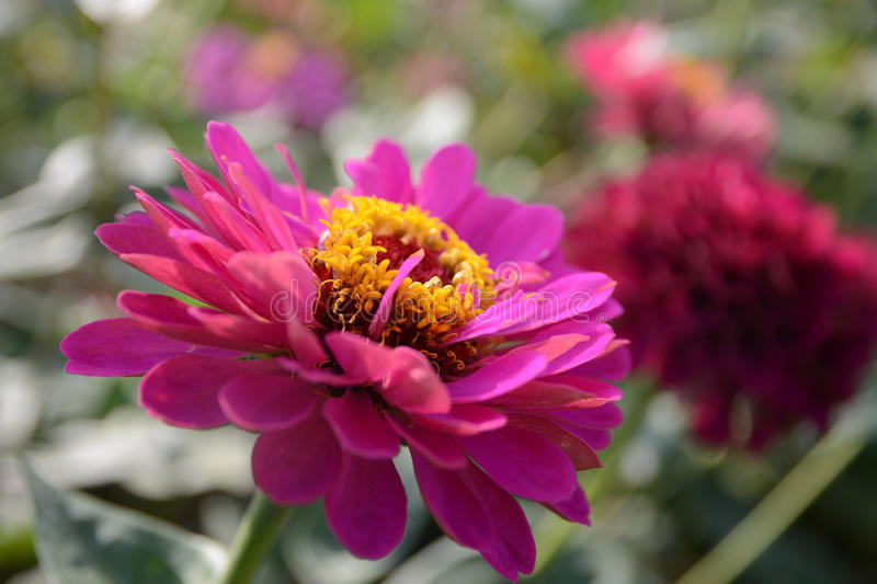 Flower blur, nature royalty free stock image