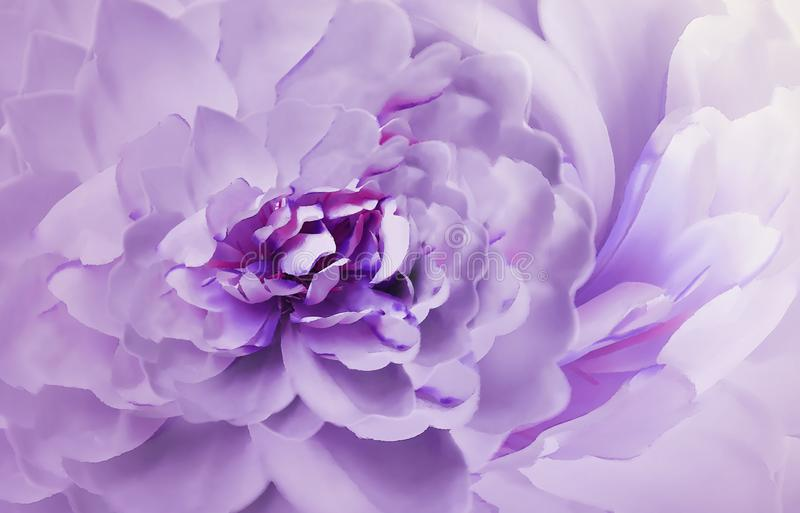 Flower on blurry purple-pink background bokeh. Violet-white flowers chrysanthemum. Floral collage. Flower composition. royalty free illustration