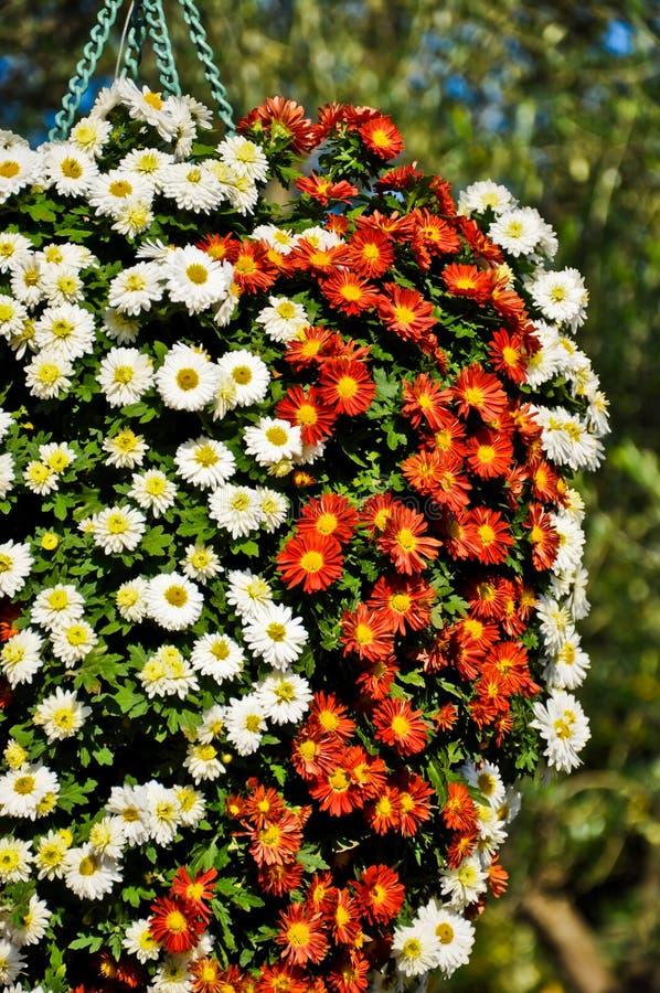 Download Flower bokeh stock image. Image of flower, florist, floral - 22001159