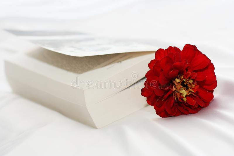 Flower In The Book Free Stock Photography
