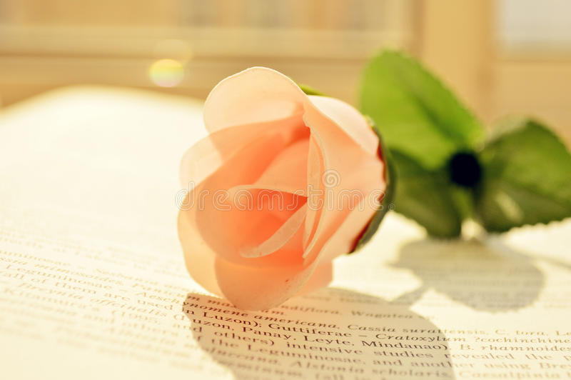 FLOWER AND BOOK. A pink flower is on a book royalty free stock image