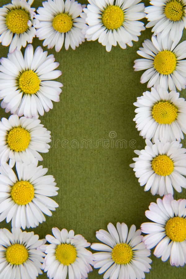Free Flower Border 1 Royalty Free Stock Photography - 7433467