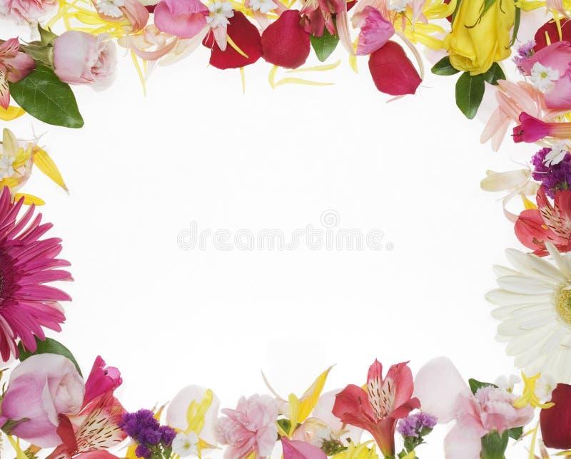 Flower Border. Over white background stock photography