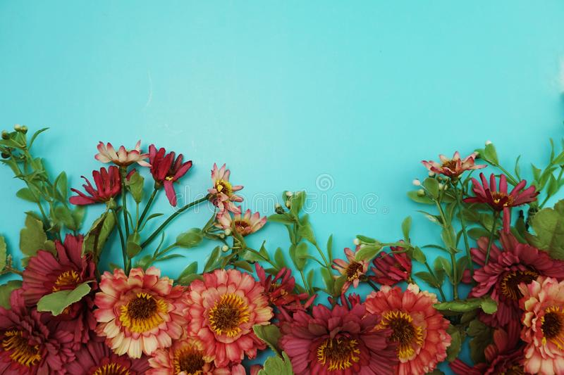 Pink daisy flower border frame on blue background royalty free stock photos