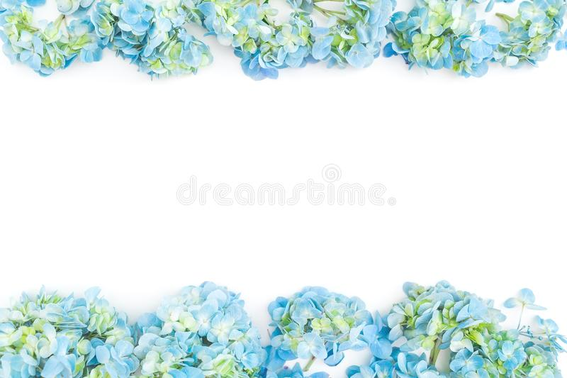 Flower border frame of blue hydrangea flowers on white background. Flat lay, top view. Floral background royalty free stock image
