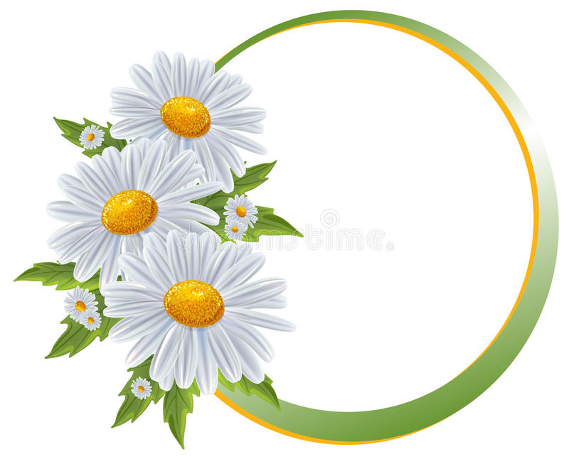 Flower borders. Bouquet camomile isolated. stock illustration