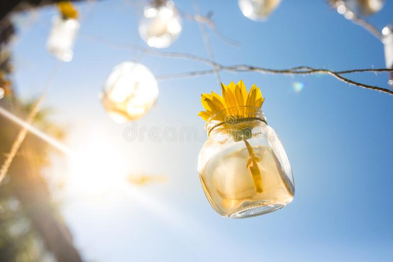 Flower in a bottle with the sun shining on it royalty free stock photos