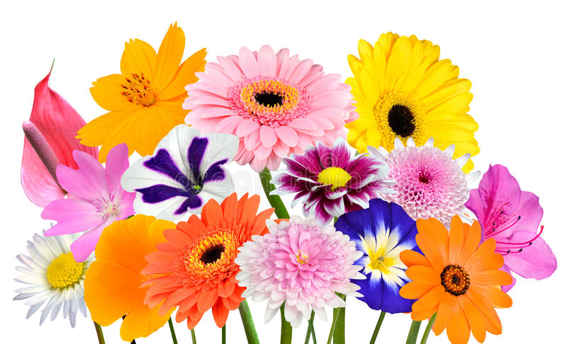 Flower Bouquet Collection of Various Colorful Flowers Isolated stock photos