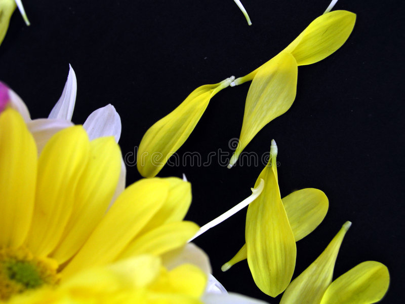 Flower Bouquet with Fallen Petals royalty free stock image