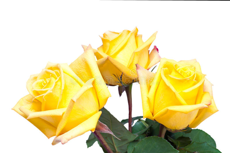 Flower Bouquet From Yellow Roses Isolated On White Stock Photography
