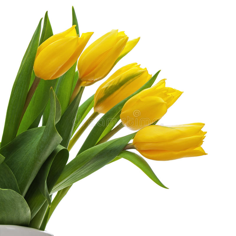Download Flower Bouquet From Yellow Tulips In Vase Isolated On White Back Stock Photo - Image of floral, green: 37701528