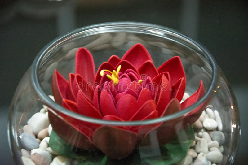 Flower in bowl royalty free stock photography