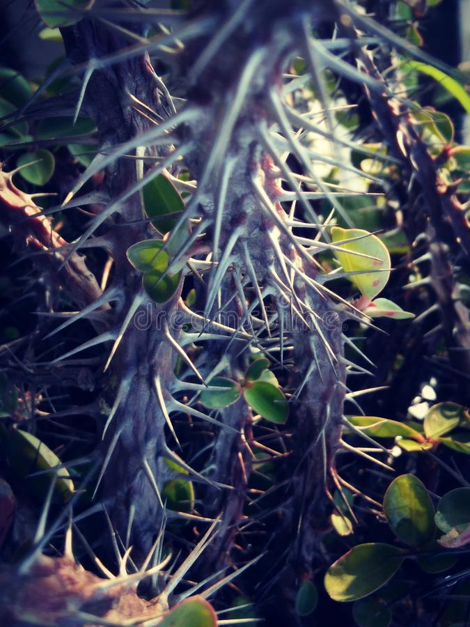 Spines royalty free stock photos