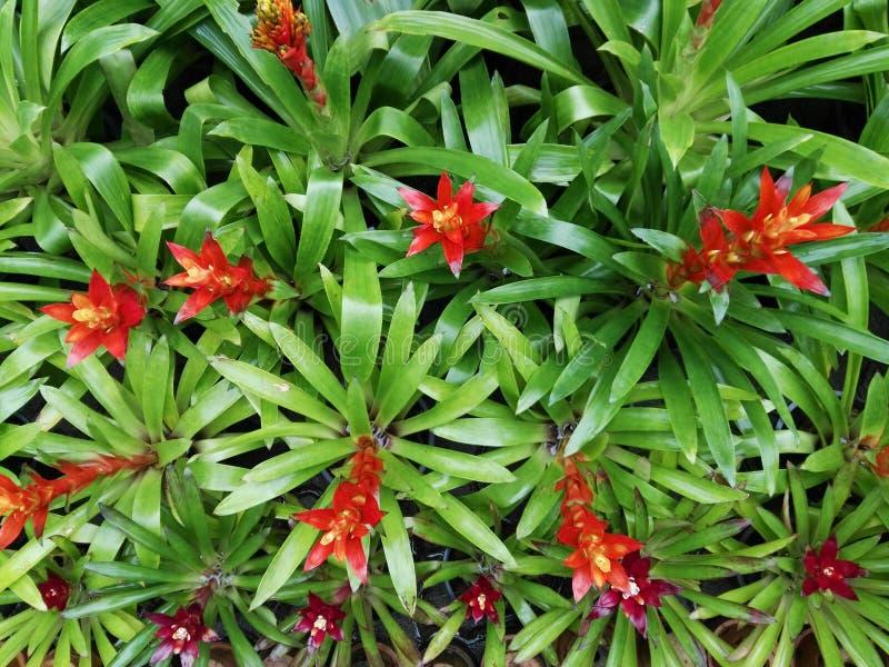 Flower of Bromeliad stock photo