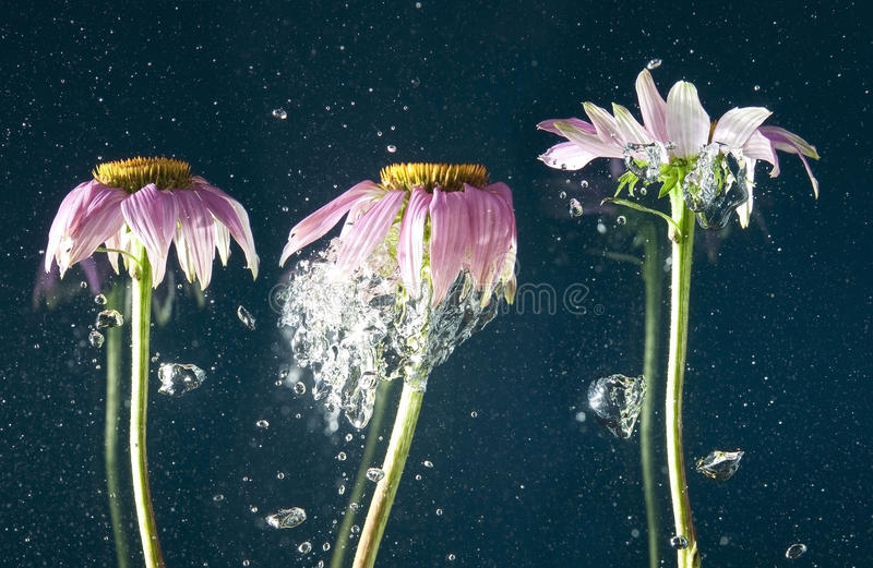 Flower and bubbles. In water stock photo