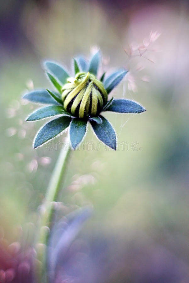 Download Flower-bud stock photo. Image of blurry, violet, green - 27525162