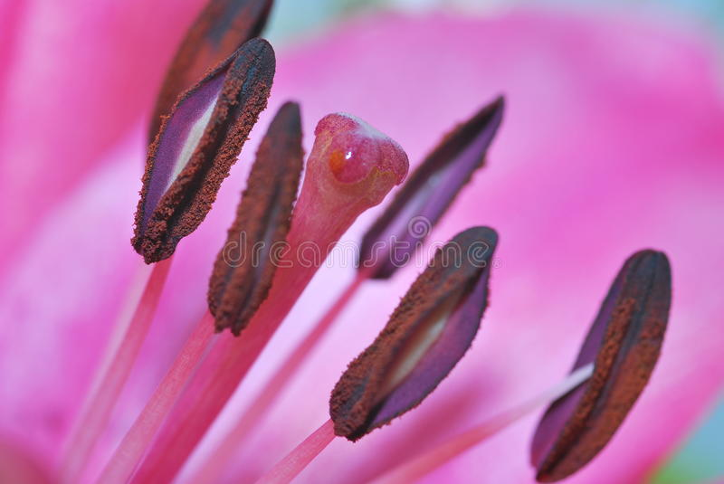Download Flower Bud stock image. Image of background, plant, nature - 54035623